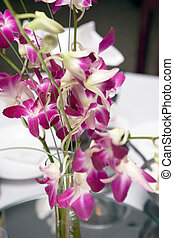 Single Flower, Orchid, close up color image