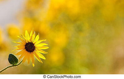 Single flower - Pretty isolated flower against a green and...