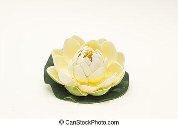 Single Flower - One Flower isolated on white