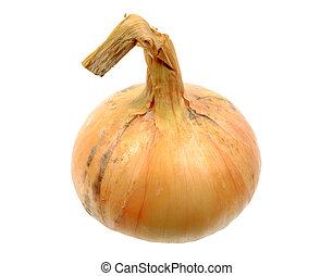 Single full orange onion