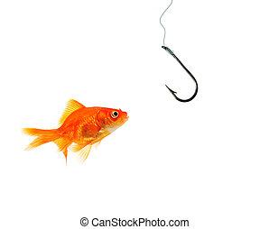 single goldfish facing empty hook