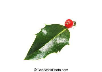 Single holly leaf