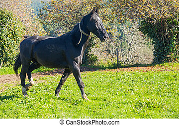 horse on a meadow