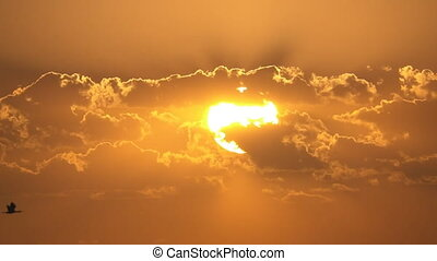Single ibis bird flying over sunset, loopable - Loop ready...