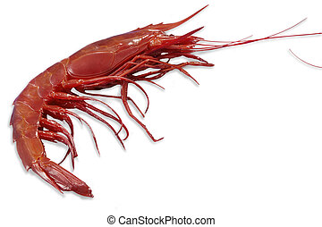 Single king prawn or shrimp - King Shrimp