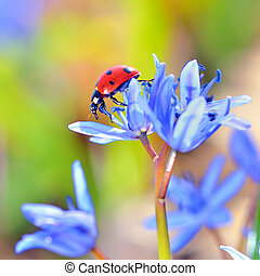 Single Ladybug on violet flowers