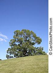large tree on hill