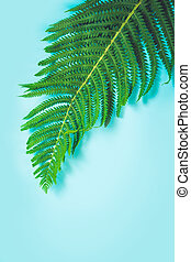 Single leaf of fern on pastel blue background. Top view, isolated with copy space. Summer.