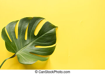 Single leaf of monstera on yellow. Close up, isolated with copy space.