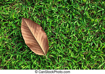 Single Leaf on Green Grass