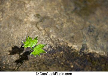 single leaf on the ground
