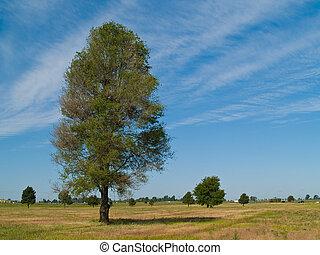 Single Leafy Tree in a Yellow Green Field