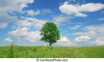 Single lone tree