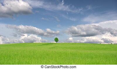 Single lonely tree
