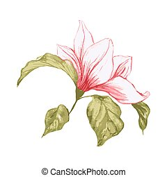 Single magnolia flower. Isolated realistic element. Blossoming pink flower, plant