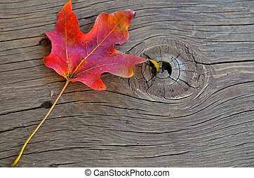 single maple leaf
