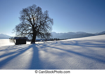 single oak tree in winter at alps mountains in bavaria, germany