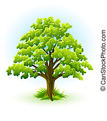 single oak tree with green leafage illustration, isolated on...
