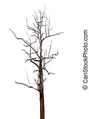 Single old and dead tree, clipping path