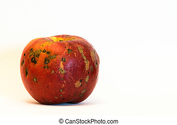 Single organic red apple isolated on white background