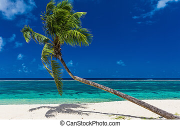 Single palm tree over a beautiful green lagoon with white sand