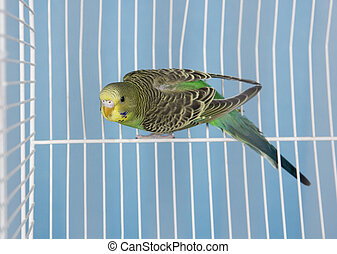 Single Pet Bird in a cage