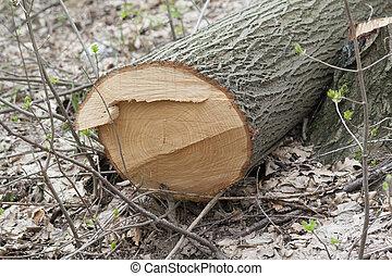 single piece of wood