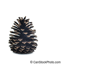 Single pine cone on white background.