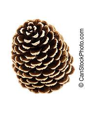 single pine tree cone