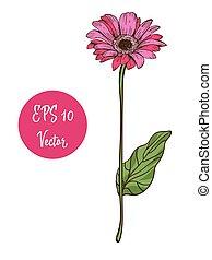 Single pink daisy flower vector illustration, beautiful...