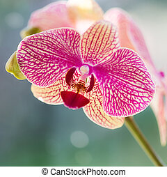 Single pink orchid with a soft bokeh background