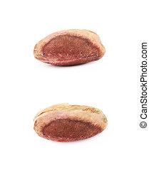 Single pistachio isolated