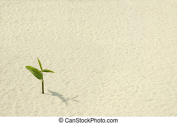 Single Plant Sprouting - A single young plant sprouting from...