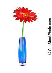 Single red gerbera flower in vase isolated on white