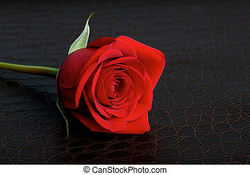 Single Red Rose on Leather Background - Red rose on a dark...
