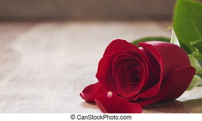 single red rose on old wood table with falling petals in slow motion