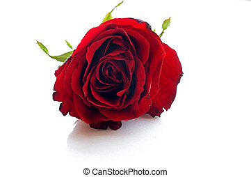 single red rose on table in garden