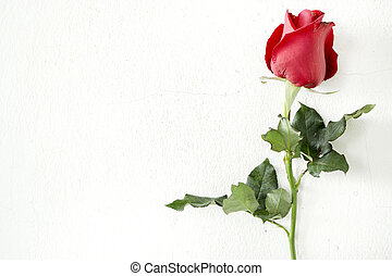 Single red rose on wall background