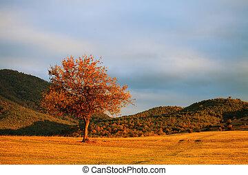 single red tree