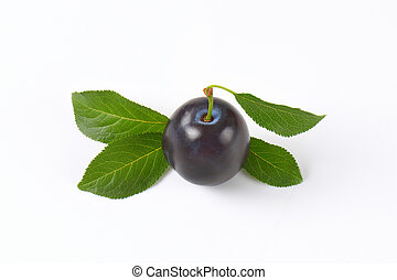 single ripe plum