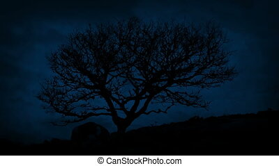 Single Rugged Tree On Windy Mountain At Night - Gnarled old...