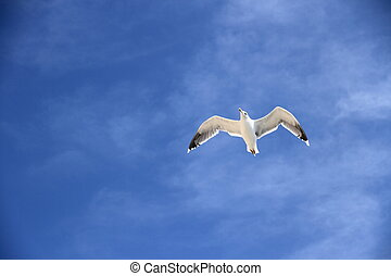 Single seagull on the blue sky as background