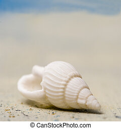 shell -  single shell in sand with copy space