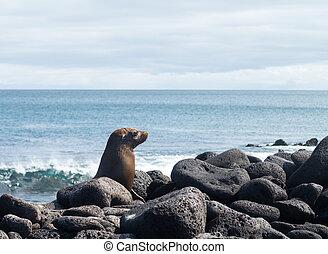 Single small seal on rocks by beach