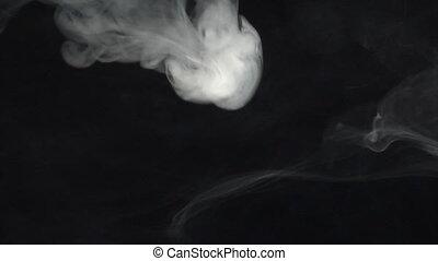 single Smoke anemone - Single Smoke anemone. Real shots, no...