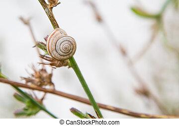 Single Snail on Grass