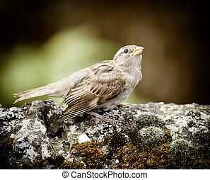 Single sparrow on a branch