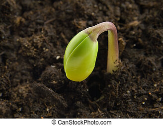 Single sprout in its first day of life