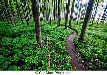 A section of single track trail winds through the forest during the spring.