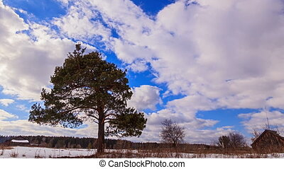 Single tree against the sky. Time Lapse